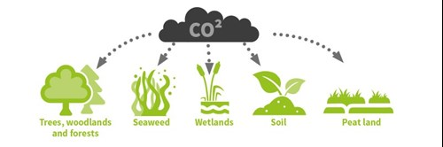 Image depicting natural methods of Co2 Absorption trees and woodland, seaweed, wetlands, peat land