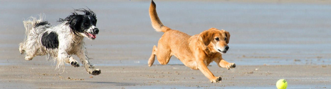 Two Dogs Chasing A Ball On A Beach